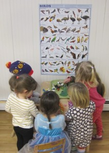 matching and identifying birds