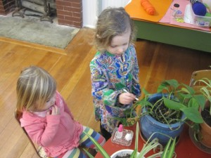 demonstrating how to care for the plants