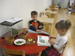 reading about butterflies